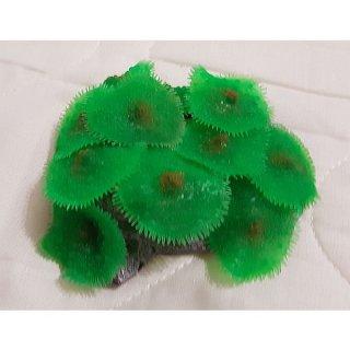 Red Sea Coral - Koralle flach grün