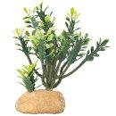 Hobby Euphorbia M 15 x 7 x 16  cm
