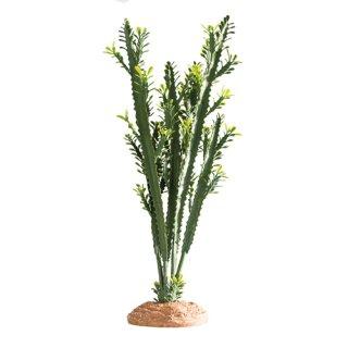 Hobby Euphorbia L 25 x 10 x 46 cm