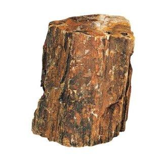 Hobby Steinholz M 1,0 - 2,2 kg schöne Stücke auch für Aquascaping