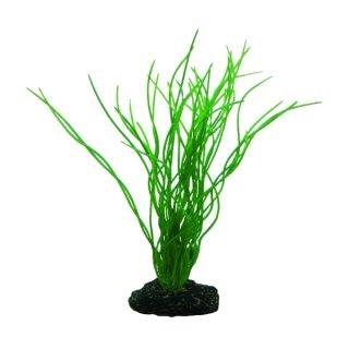 Hobby Sagittaria 20 cm -  täuschend echt wirkende Aquarienpflanze