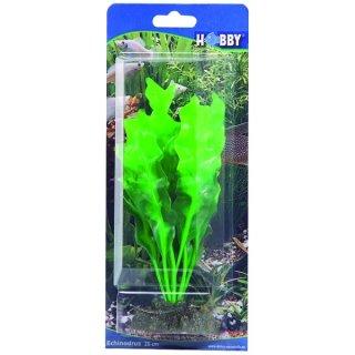 Hobby Echinodrus 20 cm, täuschend echt aussehende Aquarienpflanze