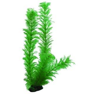Hobby Egeria 34 cm, täuschend echt aussehende Aquarienpflanze