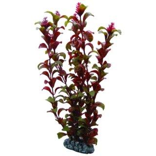 Hobby Rotala 30 cm, täuschend echt aussehende Aquarienpflanze
