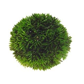 Hobby Plant Ball 9 cm
