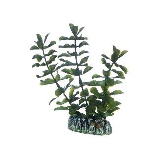 Hobby Bacopa 13 cm, kleine künstliche Aquarienpflanze