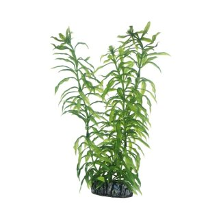 Hobby Heteranthera 25 cm täuschend echt wirkende Aquarienpflanze