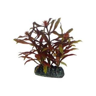 Hobby Nesaea 7 cm, täuschend echt ausshende Aquarienpflanze