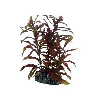 Hobby Nesaea 13 cm, kleine rote Aquarienpflanze
