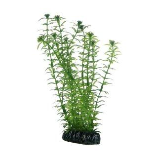 Hobby Lagarosiphon 20 cm, täuschend echt wirkende Aquarienpflanze