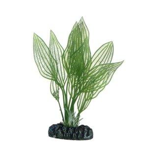 Hobby Aponogeton 16 cm, täuschend echt aussehende Aquarienpflanze