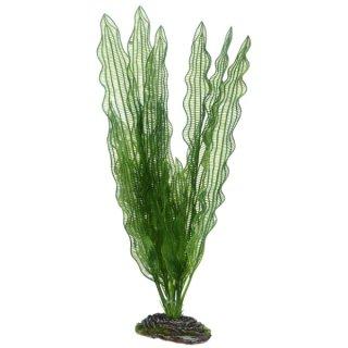 Hobby Aponogeton 39 cm,  täuschend echt wirkende Aquarienpflanze