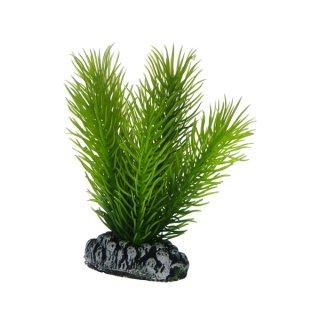 Hobby Mayaca 7 cm, täuschend echt aussehende Aquarienpflanze