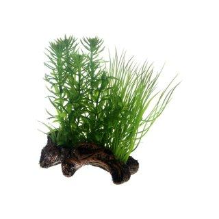Hobby Flora Root 2, S 17 cm