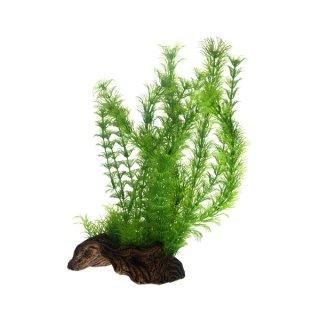 Hobby Flora Root 3, L 30 cm